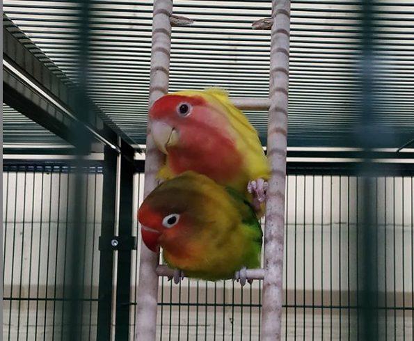 Rubita y Bebé