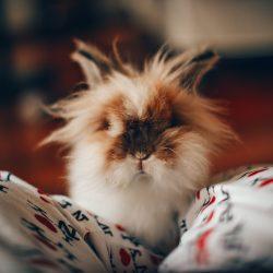 10 cosas que puedes estar haciendo mal con tu conejito sin saberlo