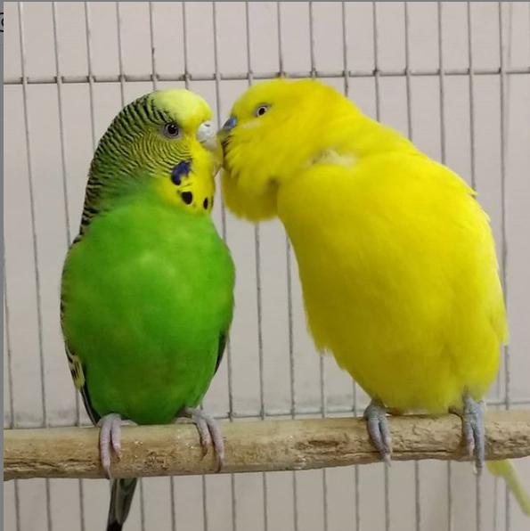 Nino y Luci